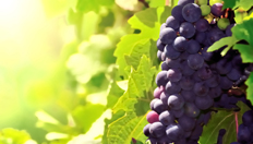 Rotwein-Weißwein